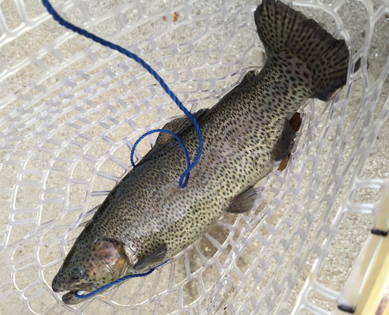 Basic trout fishing gear for Trout fishing supplies