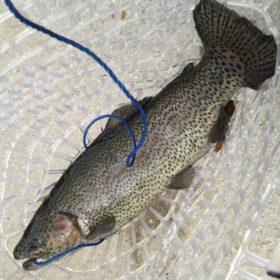 Basic Fly Fishing Tackle